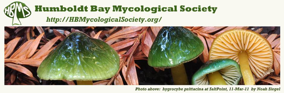Hygrocybe_psittacina_HEADERc_940x308.jpg